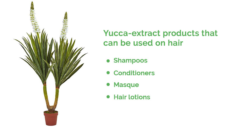 This Native American Remedy Can Help Prevent Hair Loss- Yucca Plant